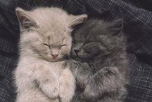 Kitties / by Ella Pusell