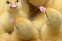 Easter and Spring / by Jacqueline Griffin
