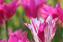 Beautiful BLOOMS / Dedicated to my mom and grandmother / by Jacqueline Griffin