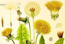 Botanical & Specimen Prints / by Michelle McGrath