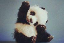 T O O | cute