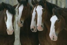 Hallmark and Clydesdales / These can turn me to mush. / by Sandi Fezatt Schrameyer