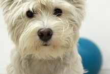 Curious, Lovable Westies! / by Mona Schroeder