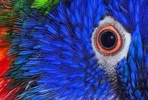 Eles passarão...eu passarinho / Pássaros / by Alfa Maria Paiva Siqueira