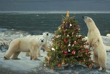 Christmas Animals / As if we couldn't love them any more then we add Christmas / by Sandi Fezatt Schrameyer