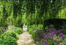 Shade garden ideas / inspiration board for creating a garden where there is no direct sunlight