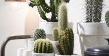 Inspiratiereis: Urban jungle / Cactussen en vetplantjes zijn weer helemaal terug van weggeweest. Insecten, vlinders, torren, kolibries en tropische planten worden afgebeeld op kussens, behang of in wandlijsten. De 'schatten' uit de natuur mogen gezien worden. Geef ze een ereplekje onder de stolp.