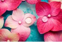 Color Palettes / Pretty colors.