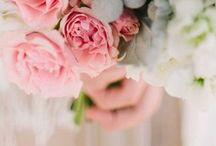 Shannon's Wedding / by Katherine Newport