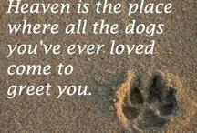 Love, Love, Love Dogs / by Lynn Smith