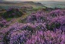 WILD FLOWER / Photography of wild flowers #flowers #wildflowers #nature #outdoor #grass #fields