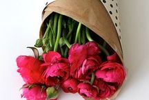 //Plants&Flowers//