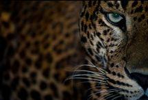Los Animales / by Daniella Nicole