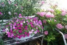 Gardening  Inside/Outside / by Anita Byrne
