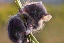Sweet Little Mice / by Delane@AutumnWoodBears
