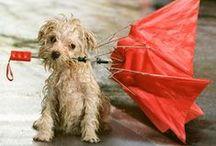 Rainy Days / by Delane@AutumnWoodBears