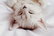 CATS ✿