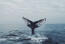 OCEAN ✿
