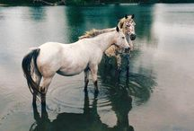 HORSES ✿