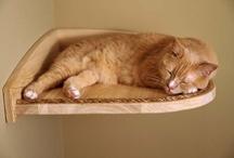 Cat Ideas / by Julie Hail Dillon
