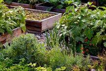 Garden / by Chelsea Berkompas
