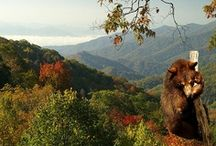 The Great Smoky Mountains / by Dollywood
