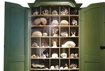 Curiosity Cabinet / by Jeff Daly