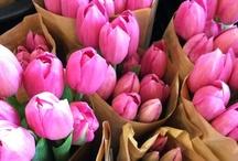 Flowers / Beautiful flowers we just LOVE!