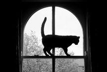 Gatos / by Estela Mastromatteo