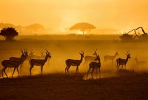 It's Time For Africa!  ♥ / by Wendy Allaman