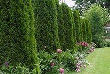 Garden: Landscaping Ideas & Inspiration