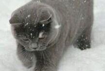 KITTY-cat-TOM