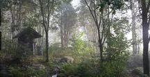 Metsäpuutarha / Mökkipihaan sopivia puutarhaideoita