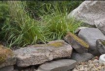 Kivikkopihan kasvit / Kivipihaan sopivia kasveja