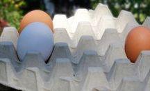 #munagate: Lidlin munatempaus 5.9.2016 / Viikon hämmentävin kuluttajauutisperformanssi kehkeytyi ns. #munagatesta eli Lidlin ilmoituksesta luopua kokonaan virikehäkeissä tuotetuista kananmunista. Nähtäväksi jää vaikuttaako munagate lähitulevaisuudessa luomumunien saatavuuteen ja hintoihin.