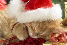 Joyeux Noel / I'll be home for Christmas, if only in my dreams / by Heather Shadden-Mattocks