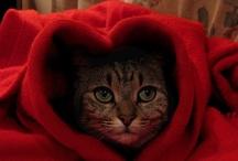 Valentine's Day / by Heather Shadden-Mattocks