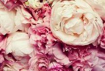 Pink Peonies / Our favorite flowers at Sophie's Closet Headquarters SOPHIESCLOSET.COM