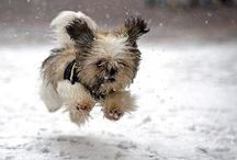 Too Doggone Cute