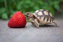 Animaux  / Animaux : Nos coups de coeur animalier !   / by Fleurs d'avenir