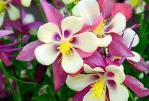 Fleurs & plantes / Les fleurs &plantes : Encore une merveille de la nature !   / by Fleurs d'avenir