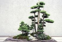Banzaï / Bonzai / #banzaï / Bonzai :  Le Banzaï est un art japonais, créer / reproduire un arbre miniature...  <3 / by Fleurs d'avenir