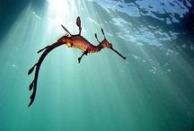 """""""Le peuple de la Mer !"""" / """"Le peuple de la mer !"""" :  Les habitants de l'océan, les animaux de mer. #Poisson #Mammifèremarin #invertébré  / by Fleurs d'avenir"""