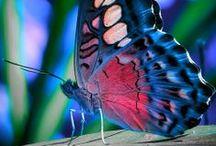 Les papillons  / by Fleurs d'avenir