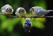 """Les oiseaux, """"Drôle de plume"""" / by Fleurs d'avenir"""