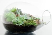 Les Jardins miniature / Jardin miniature, Mini jardin, small garden  #Garden #Jardin #Minijardin #JardinMiniature / by Fleurs d'avenir