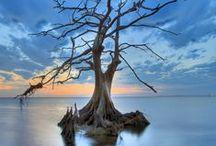 De si beaux arbres ! / De si beaux arbres :  Les arbres du monde ! beauté de la nature...  Arbre Nature Forêt / by Fleurs d'avenir