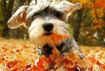 Fall Pets
