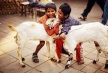 l'Inde / India / Inde, un pays magnifique ! Un pays plein de couleur, de chaleur. Des paysages sublime, toujours plus beau et plus profond... / by Fleurs d'avenir