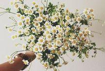 Flora & Fauna / by Clover Robin